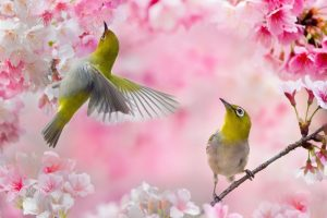 Весна пробуждает в нашей душе любовь